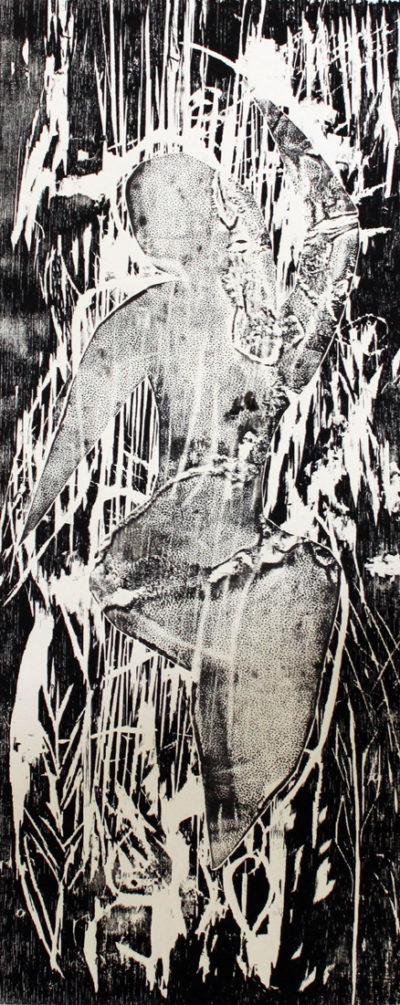 Musa salvatge